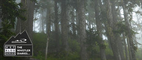 Mist and mud banner